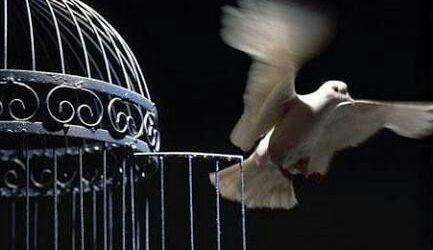 آزادی ۸ زندانی جرائم غیر عمد در گنبدکاووس